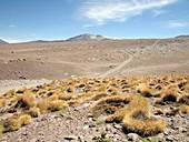 Atacama Desert vegetation,Chile