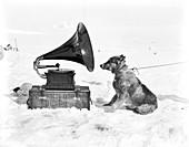 Antarctic sled dog and gramophone,1911