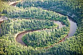 Boreal forest in Northern Alberta,Canada
