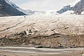 Meltwater channels on Athabasca glacier
