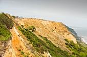 Coastal cliff on the Jurassic Coast