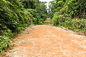 Dirt road leading into the rainforest