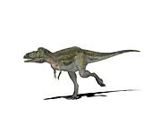 Alioramus dinosaur,illustration