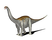 Apatosaurus dinosaur,illustration