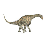 Atlasaurus dinosaur,illustration