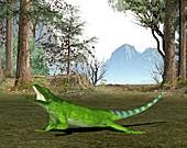 Chuckwalla lizard,illustration