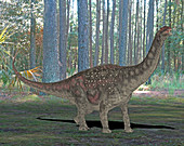 Diamantinasaurus dinosaur,illustration