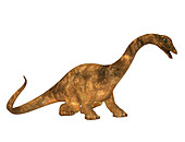 Diplodocus dinosaur,illustration