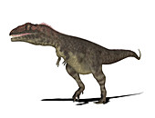 Mapusaurus dinosaur,illustration