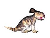 Protoceratops dinosaur,illustration