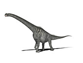 Sauroposeidon dinosaur,illustration