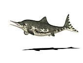 Stenopterygius prehistoric marine reptile