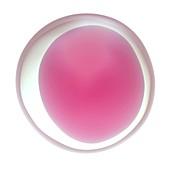 Human egg cell,illustration