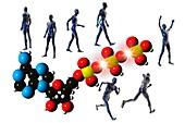 Cell metabolism,illustration