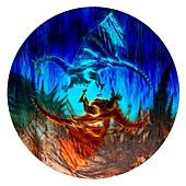 Yin Yang Dragons,illustration