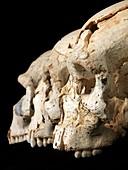 Hominin skulls from Sima de los Huesos