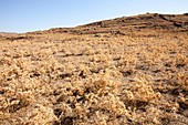 Dried up farmland on Lemnos Greece