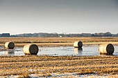 Straw bales on flooded field