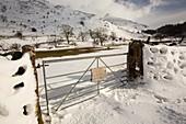 Snowdrifts below Helvellyn