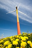 Colourful wind turbines in polders