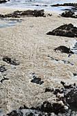 Sea foam after a storm