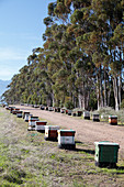 Bee hives,South Africa