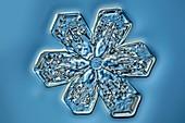 Snowflake crystal,LM