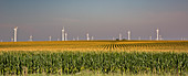 Wind farm turbines in Iowa