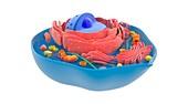 Animal cell,illustration