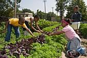Children working in an organic garden