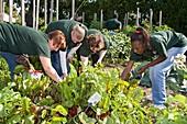 Volunteers in a community garden