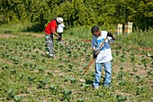 Volunteers at an urban farm,USA