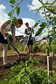 Teenagers working in a garden