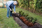 Heeling in Bare-Root Plants