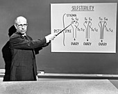 Stern lectures on self-sterility,1959