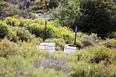 Beehives in fynbos,South Africa