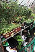Plants growing in a garden greenhouse