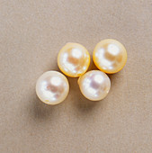 Four white marine-cultured pearls