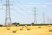 Wheat stubble in a field