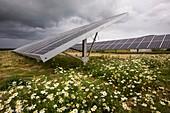 A solar park at Wheal Jane