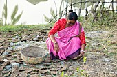 A woman collecting dried cow dung