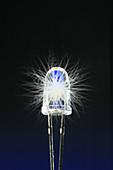 Blue-white LED