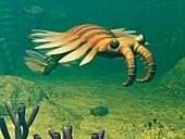 Anomalocaris prehistoric marine animal
