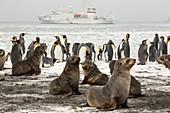 Antarctic Fur Seals and King Penguins