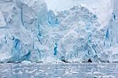 Retreating glaciers in Wilhelmina Bay