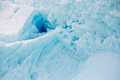 Icebergs off Curverville Island