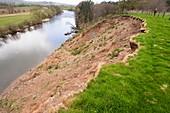 Landslip on the side of the River Eden