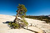 A granite dome in Yosemite