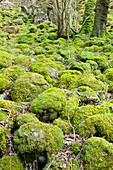 Atlantic woodland habitat