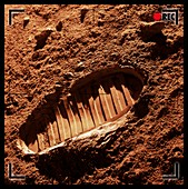 Footprint on Mars,artwork